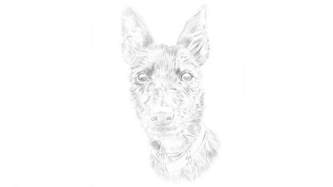 Рисуем портрет собаки карандашом - шаг 1