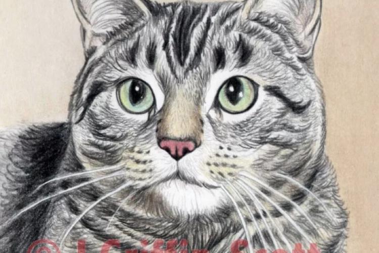 Как нарисовать котенка простым карандашом поэтапно для начинающих