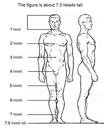Высота фигуры примерно 7,5 голов