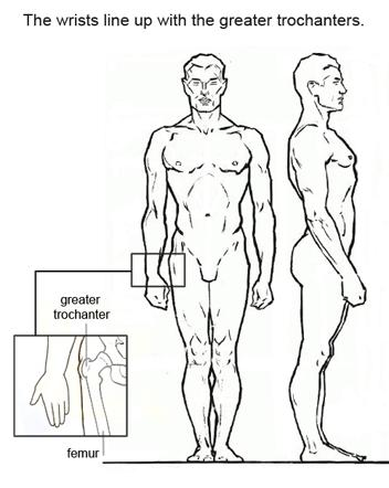 Запястье находится примерно на одной линии с выступом бедренной кости