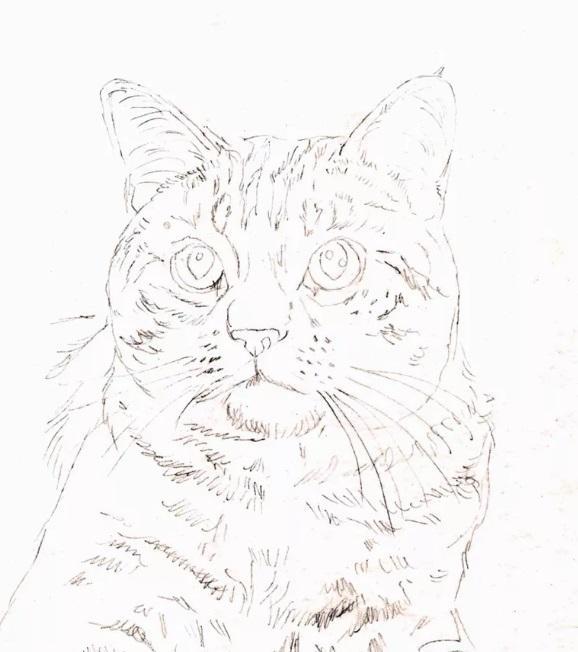 Рисуем кошку цветными карандашами - шаг 1