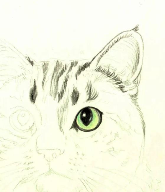 Рисуем кошку цветными карандашами - шаг 2