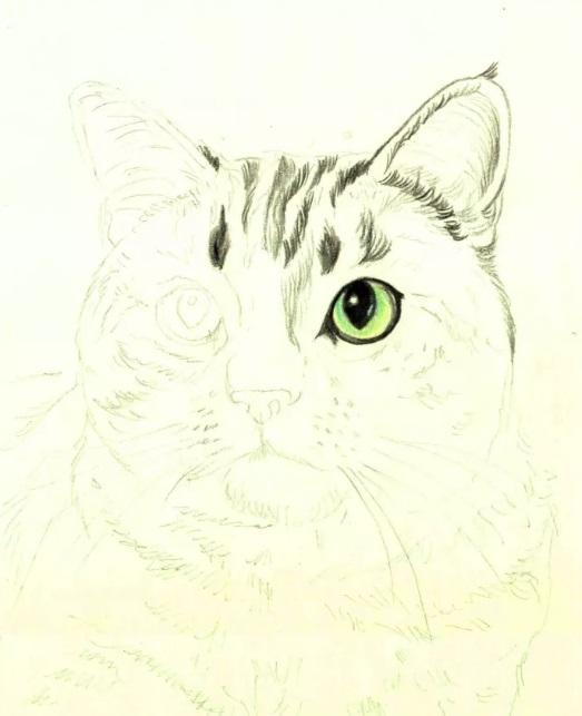 Рисуем кошку цветными карандашами - шаг 3
