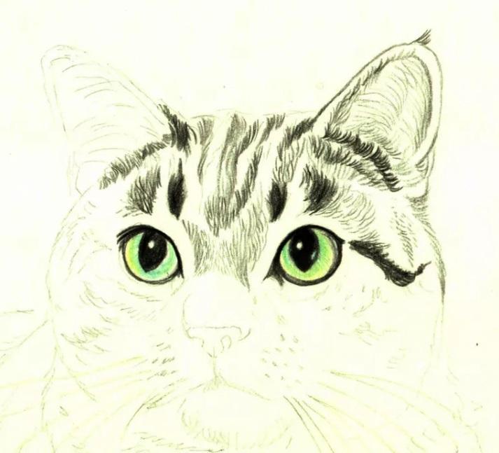 Рисуем кошку цветными карандашами - шаг 4