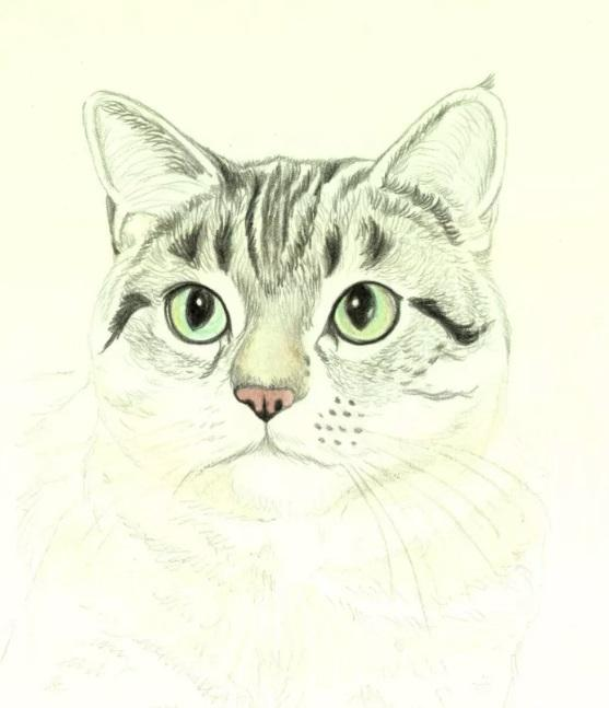 Рисуем кошку цветными карандашами - шаг 5