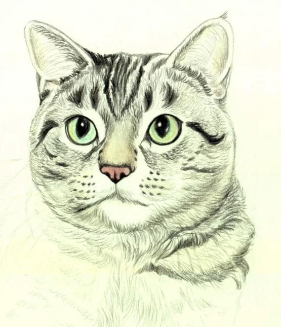Рисуем кошку цветными карандашами - шаг 6