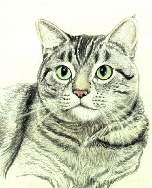 Рисуем кошку цветными карандашами - шаг 7