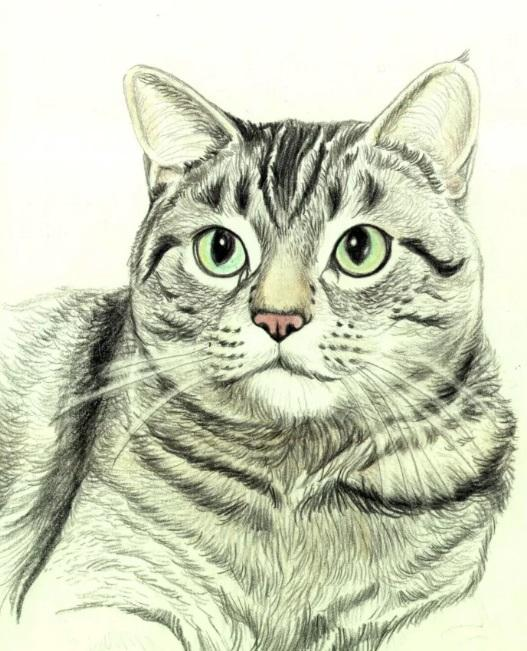 Рисуем кошку цветными карандашами - шаг 8