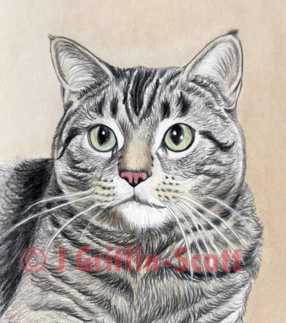 Рисуем кошку цветными карандашами - шаг 9