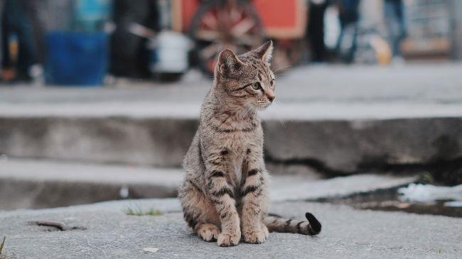 фото кота