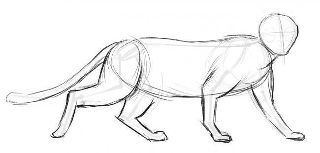 Рисуем кота - шаг 2