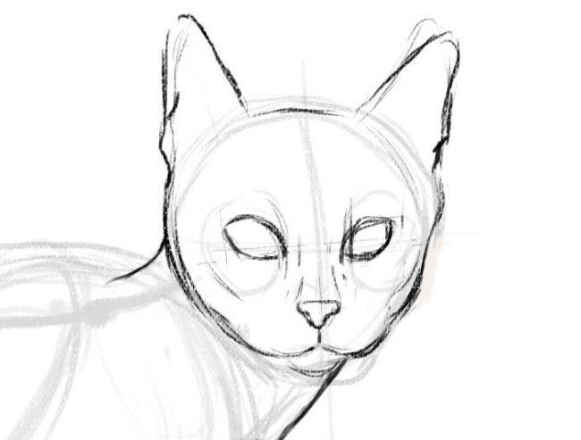 Рисуем кота - шаг 4