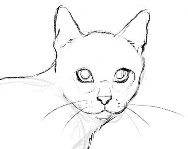 Рисуем кота - шаг 5