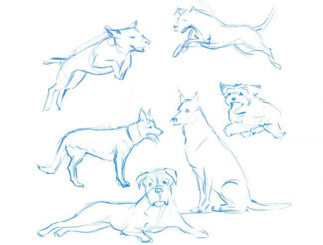 Рисуем немецкую овчарку - шаг 1