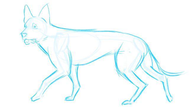 Рисуем немецкую овчарку - шаг 4