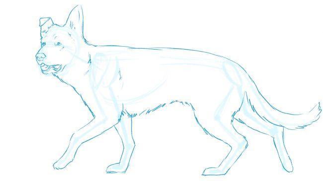 Рисуем немецкую овчарку - шаг 8