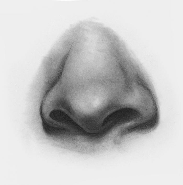 Картинки рисуем нос карандашом